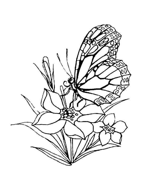 Pintando y coloreando dibujos de naturaleza for Jardin dibujo