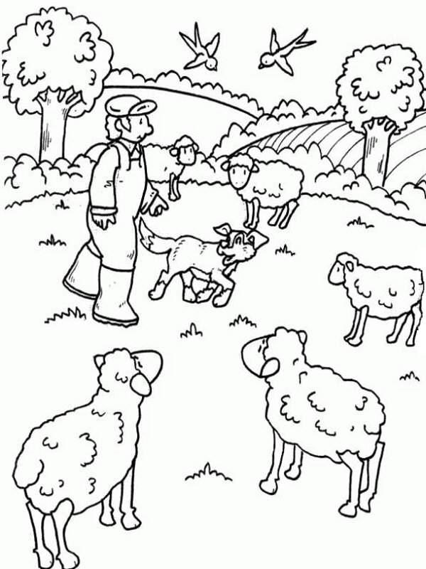 dibujo del pastor con sus ovejas